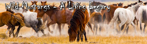 Wild Mustangs - A Living Legacy