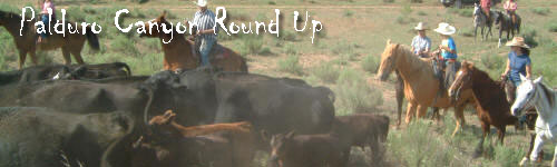 Panhandle Texas Cattle Round Up