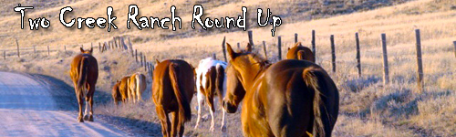 Two Creek Ranch Round Up
