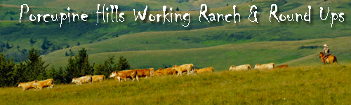 Porcupine Hills Working Ranch and Round Ups