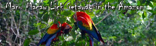 Manu Macaw Lick Getaway in the Amazon