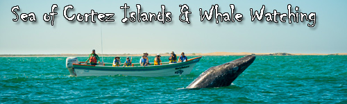 Sea of Cortez Islands & Whale Watching
