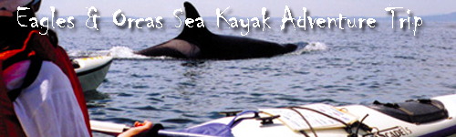 Eagles & Orcas Sea Kayak Adventure Trip