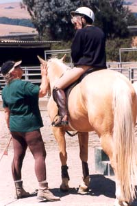 Horse riding equestrian clinics