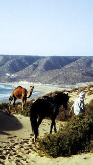 Horse riding vacations in Morocco