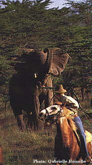 Horse riding Safaris in Kenya